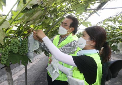 이성희 농협중앙회장, 신규직원들과 포도농가 일손돕기 나서