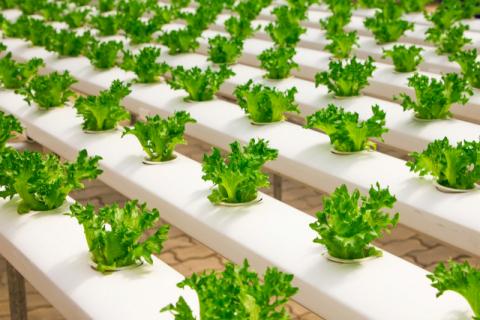 코로나19에도 새역사 쓴 식품업계, ESG로 다시 한번 도약