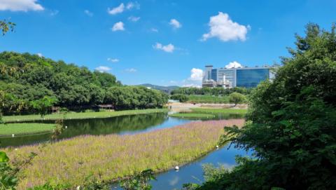 삼성디스플레이, 아산사업장 주변에 친환경 생태 식물섬 조성